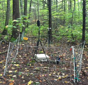 Scott McFarland has set up multiple sound recording stations throughout GSMNP, such as this one at Bullhead Trail.